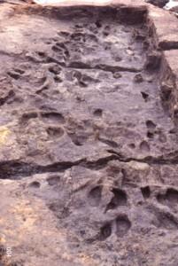 縄文人の足跡