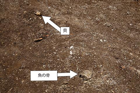 utidakaizuka0619-2