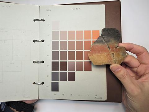 土色帖に照らして赤色の色調を観察